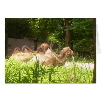 100_1373 - Carte de note de chameau