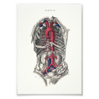1895 artères d'impression d'anatomie d'humain photo d'art