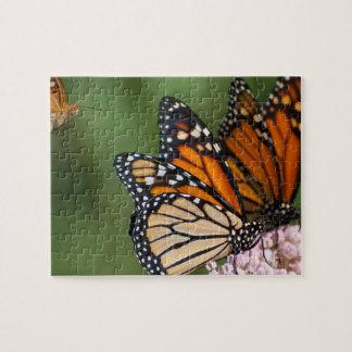 2 monarques sur le puzzle de photo de milkweed