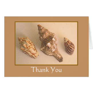 3 cartes de remerciements de coquilles