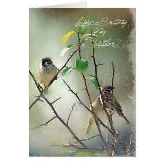 3 oiseaux de chanson reposant la carte