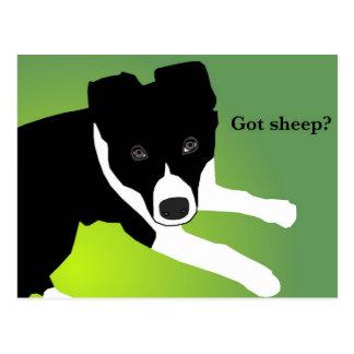 """""""A obtenu des moutons ?"""" Cartes Carte Postale"""