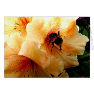 Abeille sur un rhododendron - carte