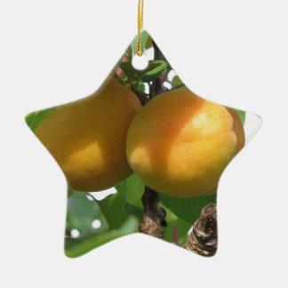 Abricots mûrs accrochant sur l'arbre. La Toscane, Ornement Étoile En Céramique