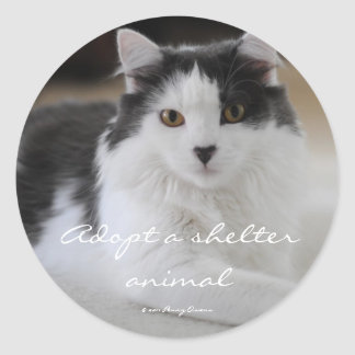 Adoptez un animal d'abri autocollants ronds