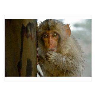 Affaires de singe carte postale