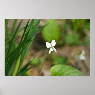 Affiche blanche minuscule de fleur sauvage de poster