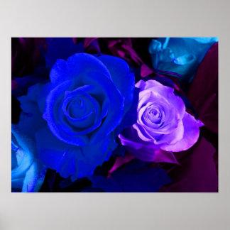 Affiche bleue de rose de pourpre
