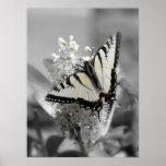Affiche de papillon de machaon
