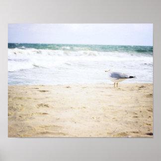 Affiche de plage de l'eau de mouette de plage de