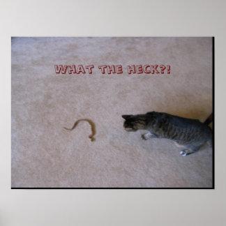 Affiche humoristique de serpent et de chat