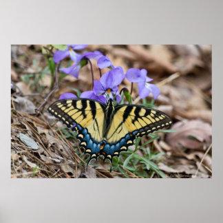 Affiche orientale de violettes de papillon de poster