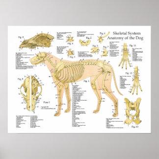 """Affiche squelettique 18"""" d'anatomie de chien X 24"""""""