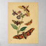 Affiche vintage de papillon