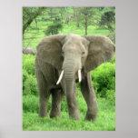 Affiches d'éléphant