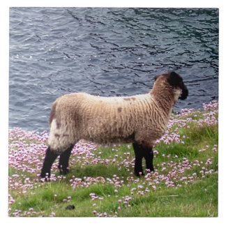 Agneau du sud de côte de Devon se tenant dans les  Carreaux