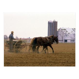 Agriculteur amish employant un planteur carte postale