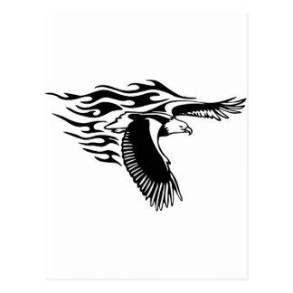 aigle noir carte postale