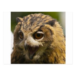 aigle owl.jpg carte postale