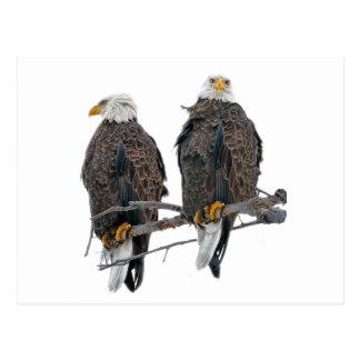 Aigles jumeaux carte postale