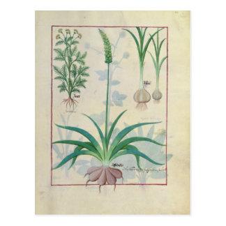 Ail et d'autres plantes carte postale