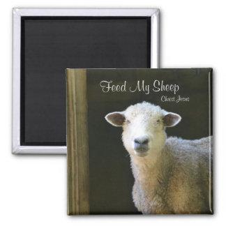 Aimant Alimentez mes moutons
