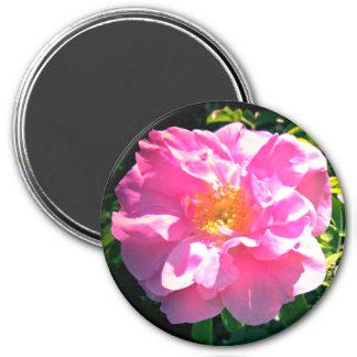 Aimant Assez dans le rose de rose