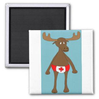 Aimant Canadien, hein ? Orignaux