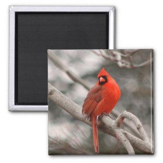 Aimant cardinal masculin