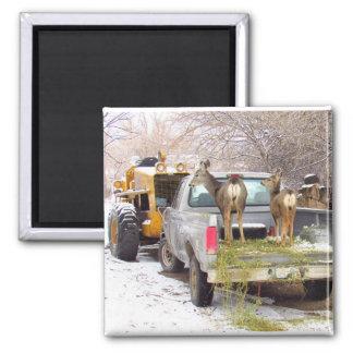 Aimant Cerfs communs de camion