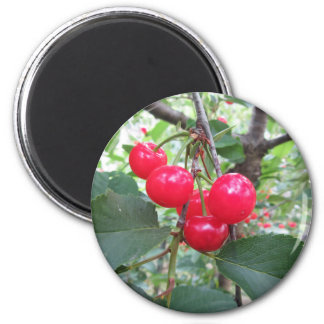 Aimant Cerises rouges de Montmorency sur l'arbre dans le