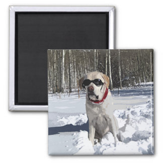 Aimant Chien jaune de neige de Labrador