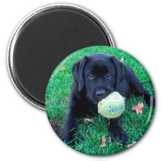 Aimant Chiot noir de Labrador - boule de jeu