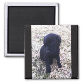 Aimant Chiot noir de labrador retriever