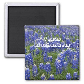 Aimant de Bluebonnets de fleur d'état du Texas