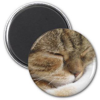Aimant de chat de sommeil