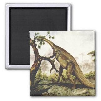 Aimant Dinosaures vintages, Plateosaurus frôlant sur des