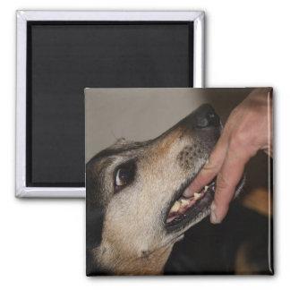 Aimant Doigt acéré de chien