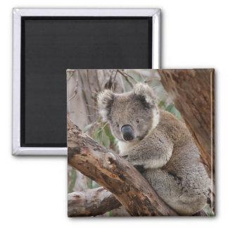 Aimant d'ours de koala