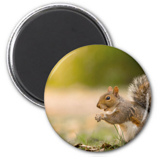 Aimant Écureuil affamé