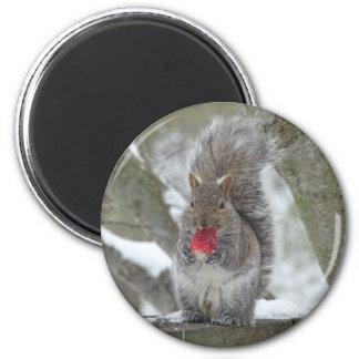 Aimant Écureuil de fraise