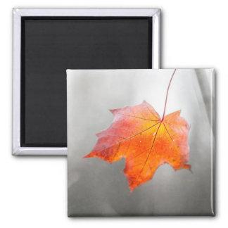 Aimant Feuille d'érable rouge - automne de velours