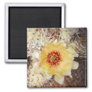 Aimant Fleur jaune de figue de Barbarie