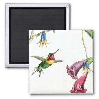 Aimant Fleurs d'animaux de faune d'oiseaux de colibris