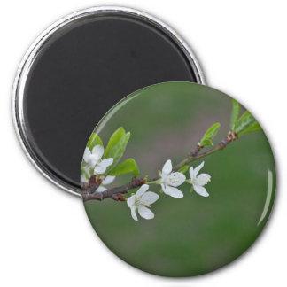 Aimant Fleurs de cerisier