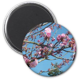 Aimant fleurs de cerisier de ressort