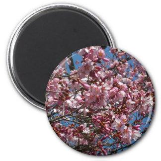 Aimant Fleurs de cerisier et ressort de ciel bleu floral