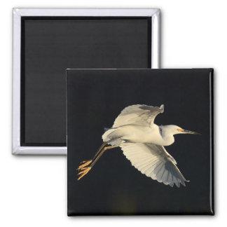 Aimant - flyby de héron de Milou