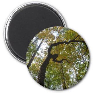 Aimant Forêts de la Caroline du Nord