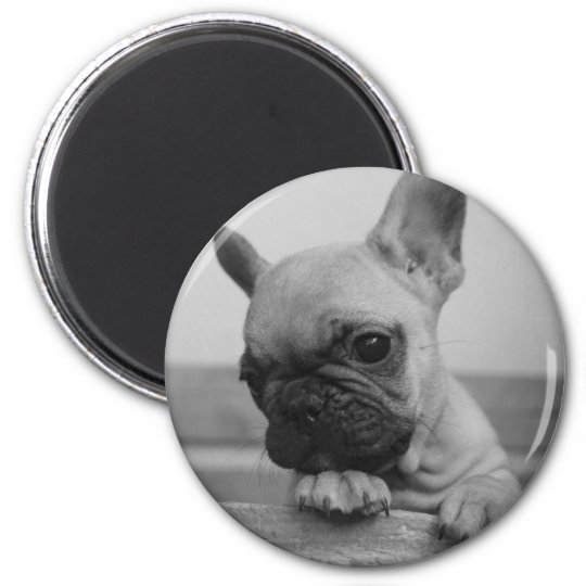 Aimant Frenchie puppy